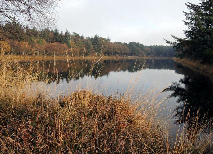 Herfst op Terschelling, bij het meertje (naam vergeten). Om de hoek bij Villa Rosa, luxe vakantiewoning op Terschelling voor 6 personen.