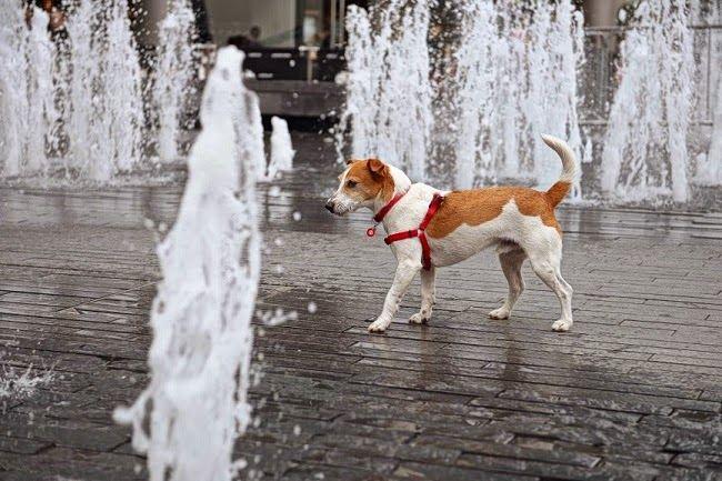 Ile wody powinien pić pies