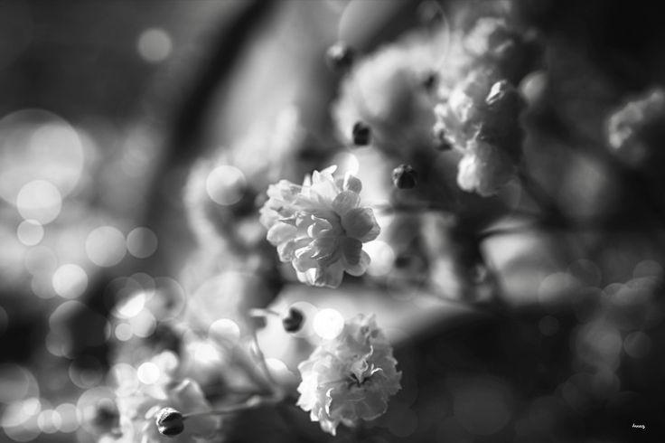 """""""L'amore è un fiore che cresce in ogni terreno, lavora ai suoi dolci miracoli impassibile alle brinate autunnali e alla neve invernale fiorendo bello e fragrante tutto l'anno, e benedicendo sia chi da sia chi riceve.""""  Louisa May Alcott  #photography #flowers"""
