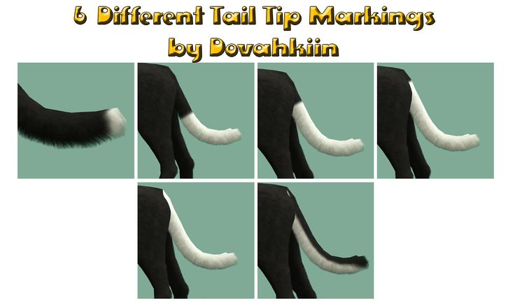 tail markings - by Dova Creations