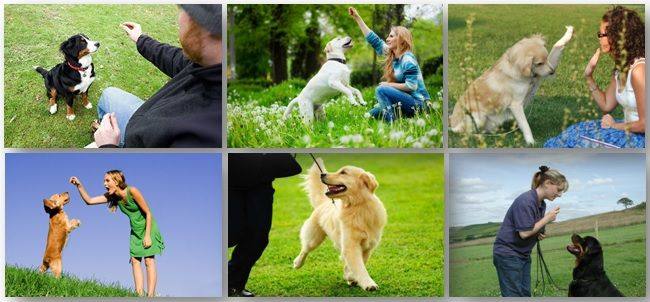 Doggy Dans Online Dog Trainer is amazing online dog training guide to transform the relationship with your dog easily with Doggy Dan's training guide.