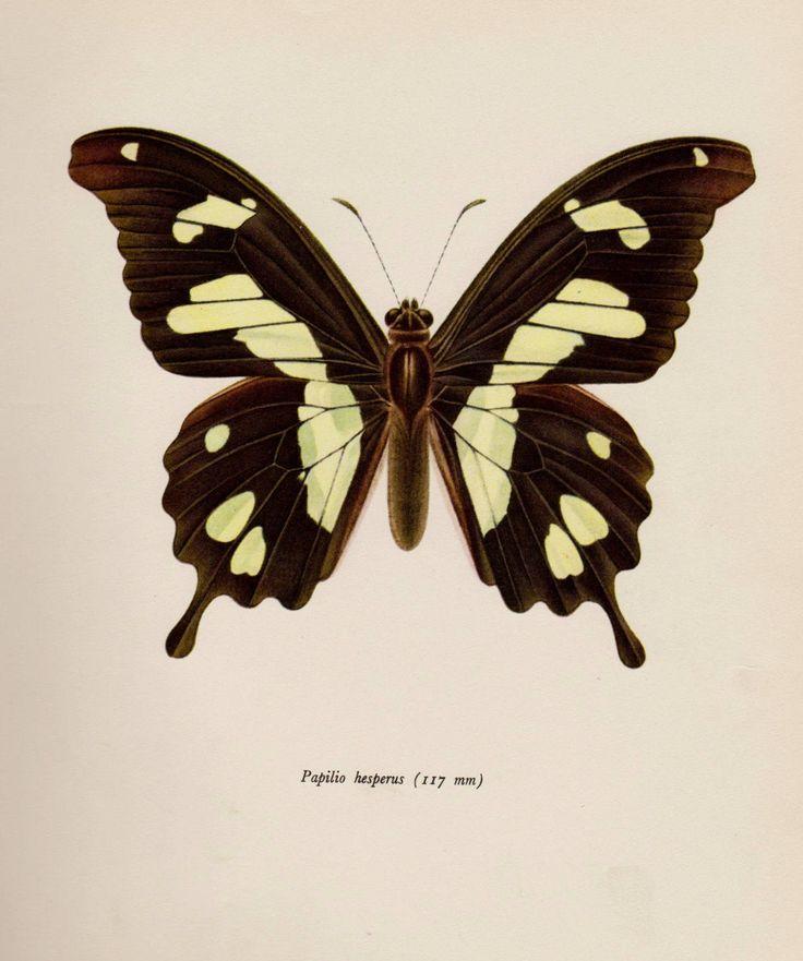 352 best Vintage Insect Prints images on Pinterest | Retro ...