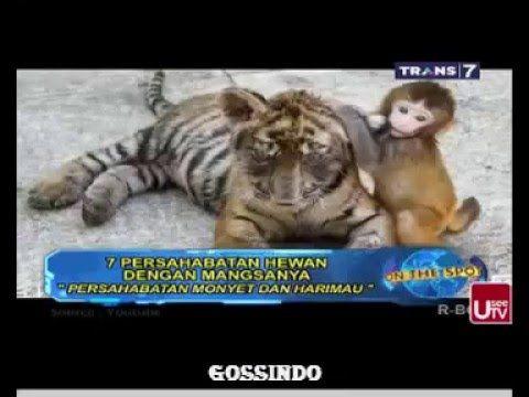 7 persahabatan hewan dengan mangsanya on the spot 14 dec 2015