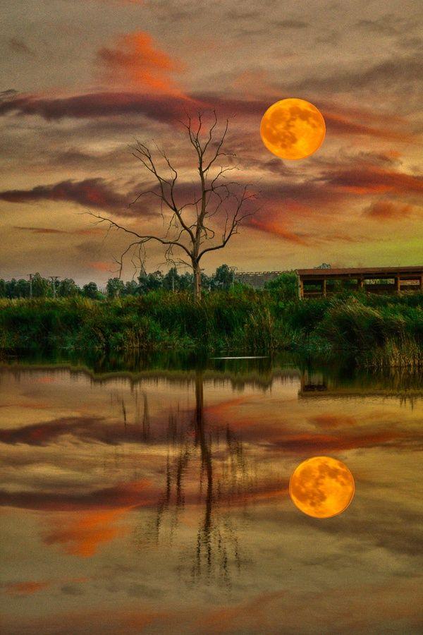 crescentmoon06:    luna en el estanquebyjuan rodrigo leguaonFivehundredpx.