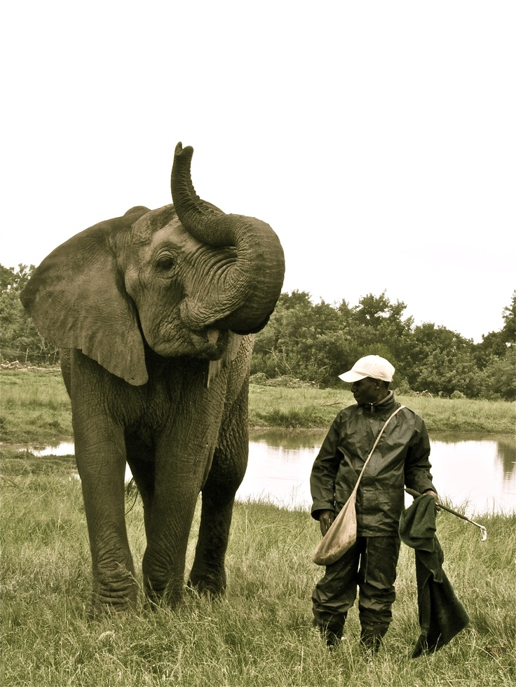 "Thandi, the elephant, and her trainer. The Elephant Sanctuary, Plettenberg Bay, Western Cape, South Africa. ""Thandi"" means ""love"" in Xhosa, a South African indigenous language."