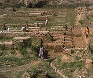 All about the discovery of the Harappan Civilization.