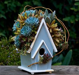 Succulent Rooftop Birdhouses for all gardens in the city or country - The Succulent Perch