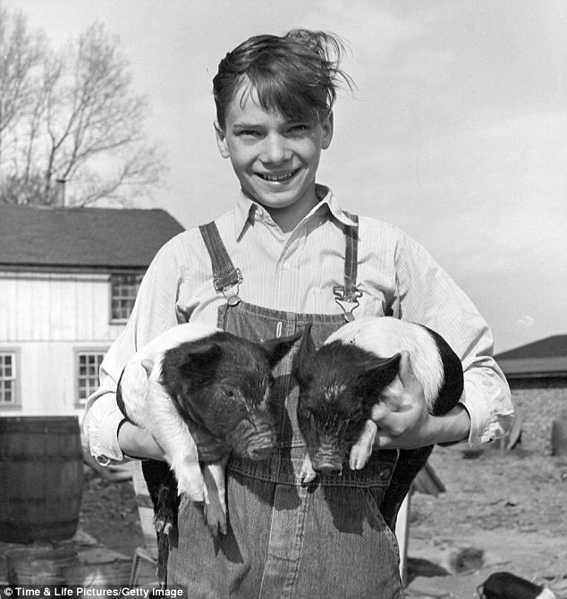 American pastoral: A farmer's son hold a set of Hampshire piglets in Pennsylvania. The image of the farming family is indelibly American