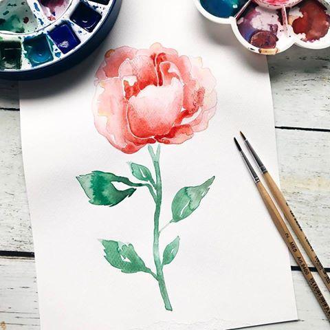 Rose in Aquarell
