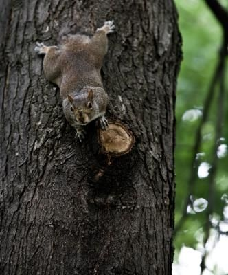 Squirrel Squirrel Baffle And How To Build On Pinterest