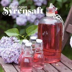 Passa på att koka saft av dina syrenblommor innan de blommar över!