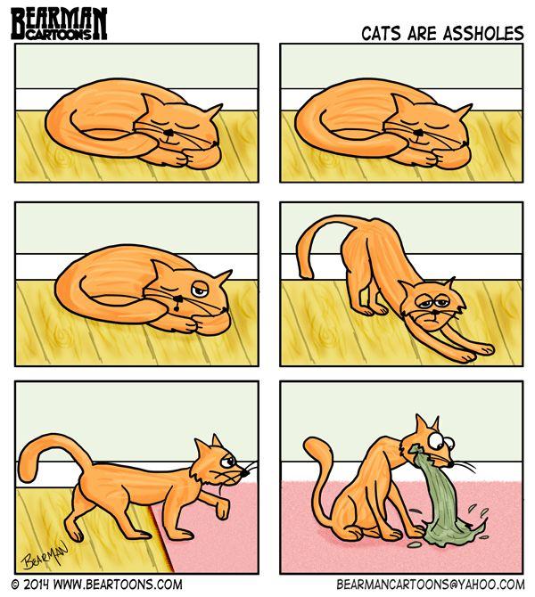 Why Cats are Assholes by Bearman Cartoons