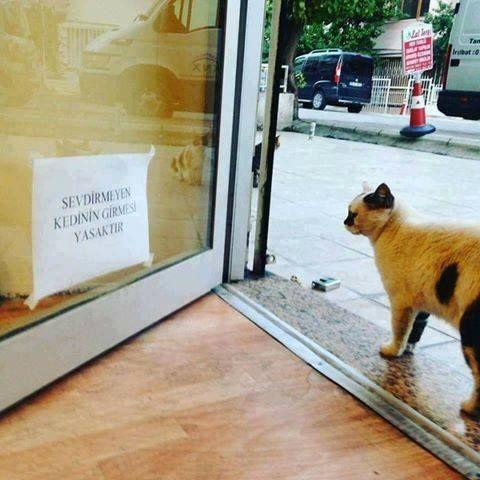 Bir kedi kendini sevdirmese   bir insan ona kötü bir şey yapmış demektir                                           Söz : Nisa Akkul