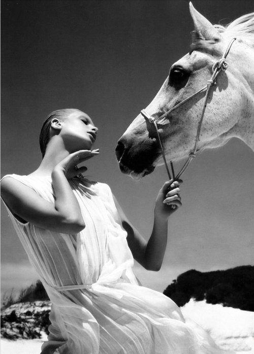 horse / fashion