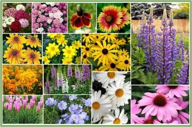 All Perennial Wildflower Seed Mix- To do my own Wildflower Bouquets!