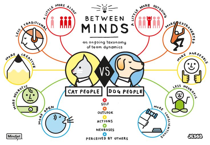 Agree? Cat Person vs. Dog Person