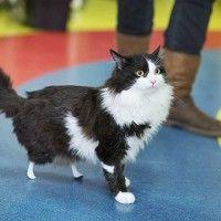 #dogalize La storia di Pooh, il gatto con le zampe bioniche #dogs #cats #pets