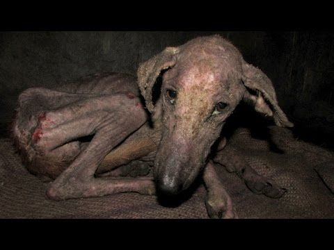 When They Found This Homeless Puppy, He Was Too Sick to Even Eat. You Won't Believe What He Looks Like Now! (VIDEO) | One Green Planet