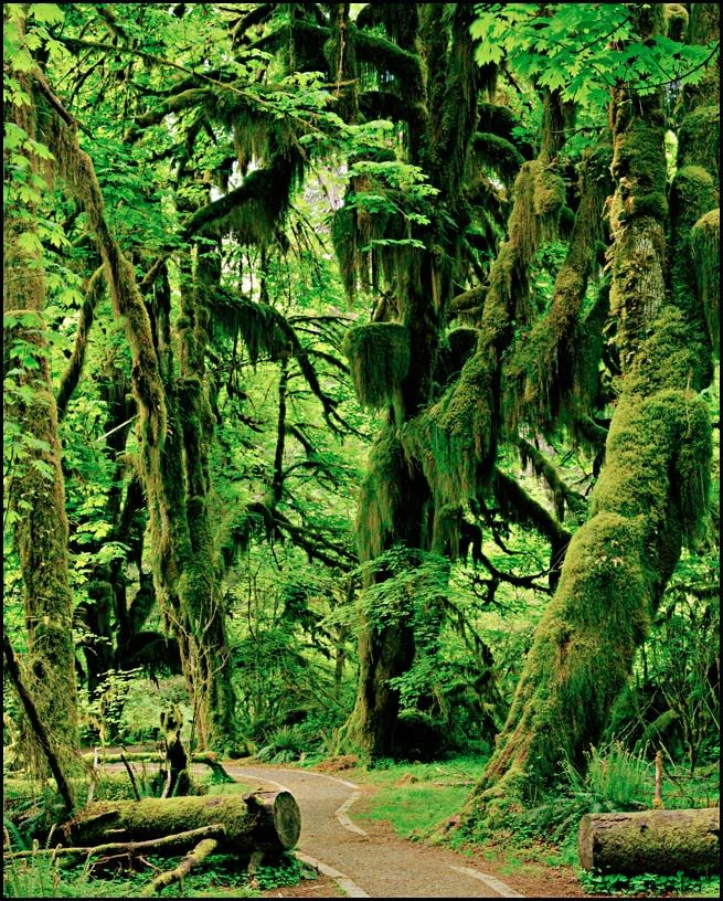 Olympic Rain Forest, Washington State.  An amazing place to visit.  Ferns as tall as a person!