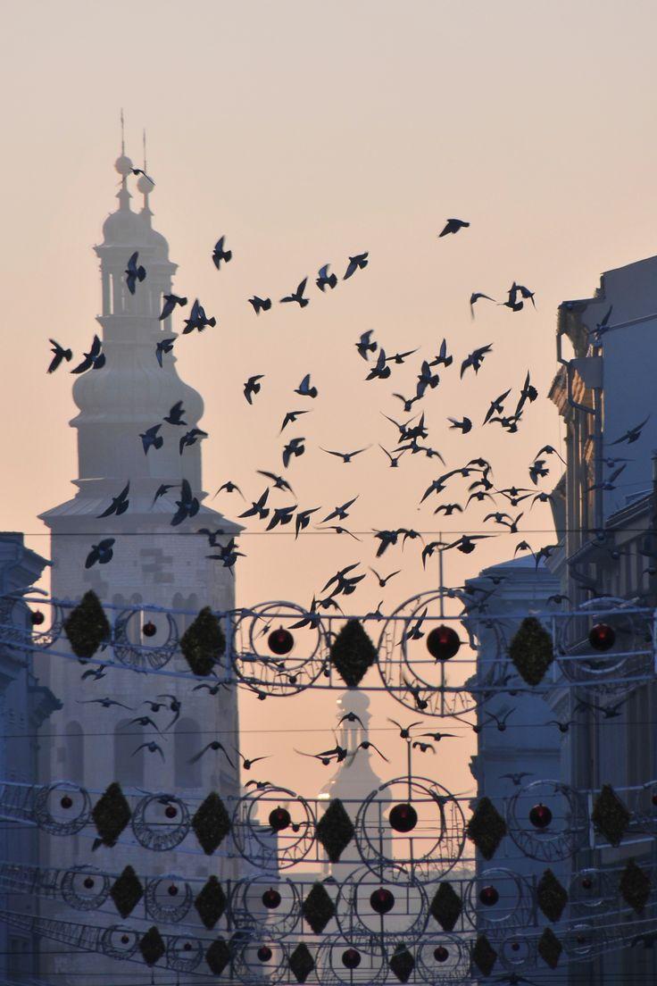 birds - Grodzka Street in Krakow