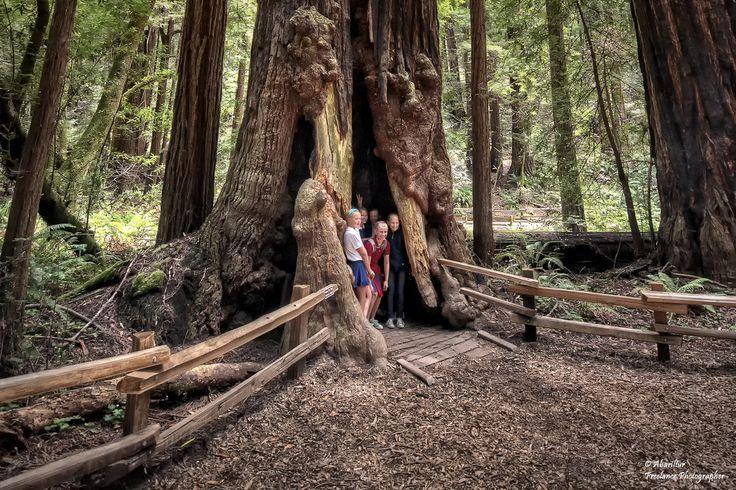 https://flic.kr/p/87GjTE | Muir Woods National Monument (Redwood/ Sequoias III). San Francisco (California/ USA) | Muir Woods es uno de los Parques Nacionales más conocidos del norte de California. Debido a su importancia fue declarado Monumento Nacional en el año 1908. Situado en el condado de Marin, a solo 12 kilómetros del Puente Golden Gate de San Francisco, Muir Woods es un bosque de 295 hectáreas repleto de sequoias gigantes envueltas en un verde paisaje de ensueño. Las sequoias…