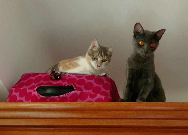 Lola e Tetê.