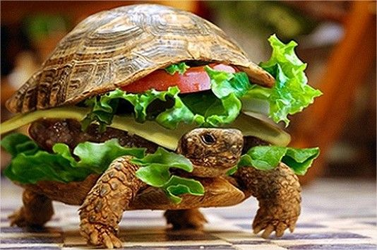En China un hombre trata de hacer pasar su tortuga como una hamburguesa