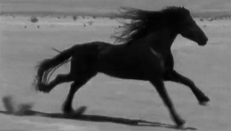 """Post #: """"O preço da liberdade é a própria liberdade de cada um, não importa se humanos ou animais. Só quem se torna enclausurado por opção ou imposição é que sabe o quanto ela vale, E o quão maravilhoso é tê-la de volta, e não perdê-la novamente."""""""