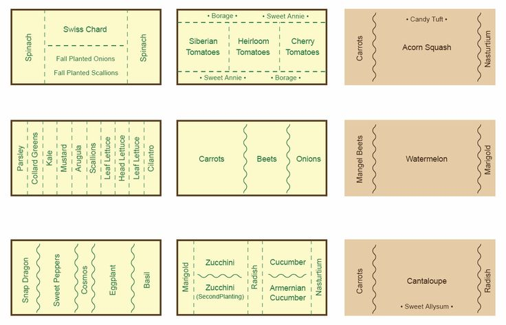 Companion Planting Chart, Map and Guide   Companion Gardening Map & Chart