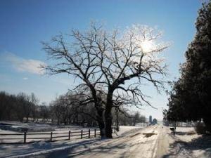 Wintertime at Irish Hollow