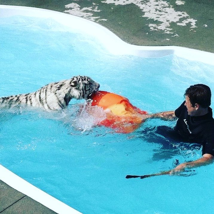 This is a tiger swim lol