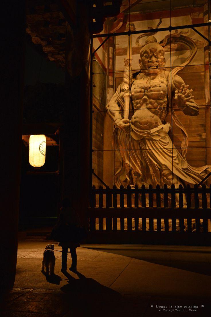 【わんこもお参り】 東大寺南大門前にて撮影。 2017年2月8日。