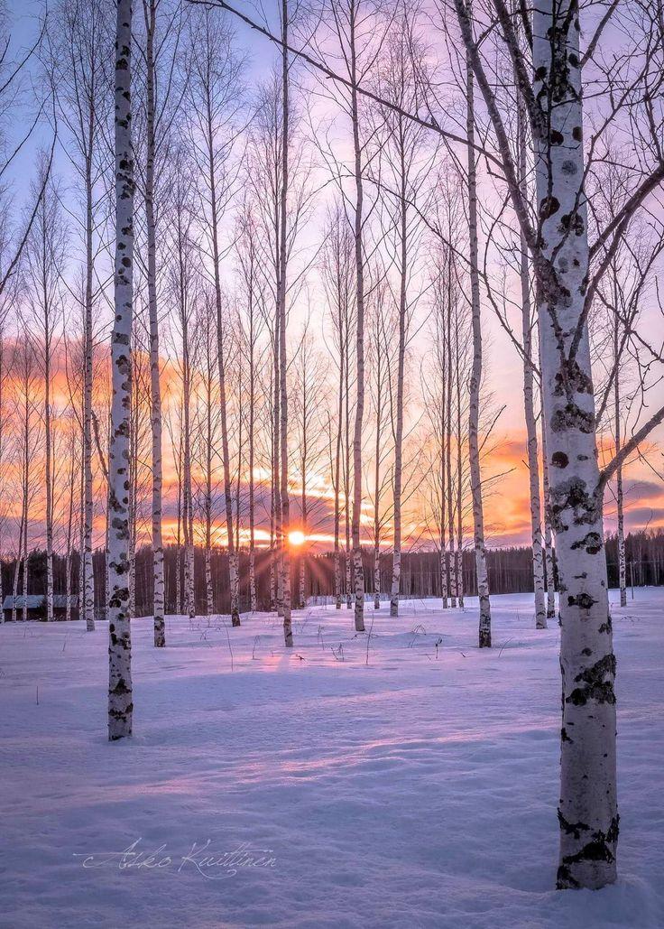 Winter (Finland) by Asko Kuittinen