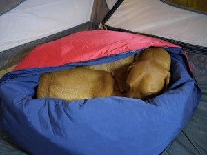 Camping and Backpacking Sleeping Bag Gear For Dogs | GNPTG