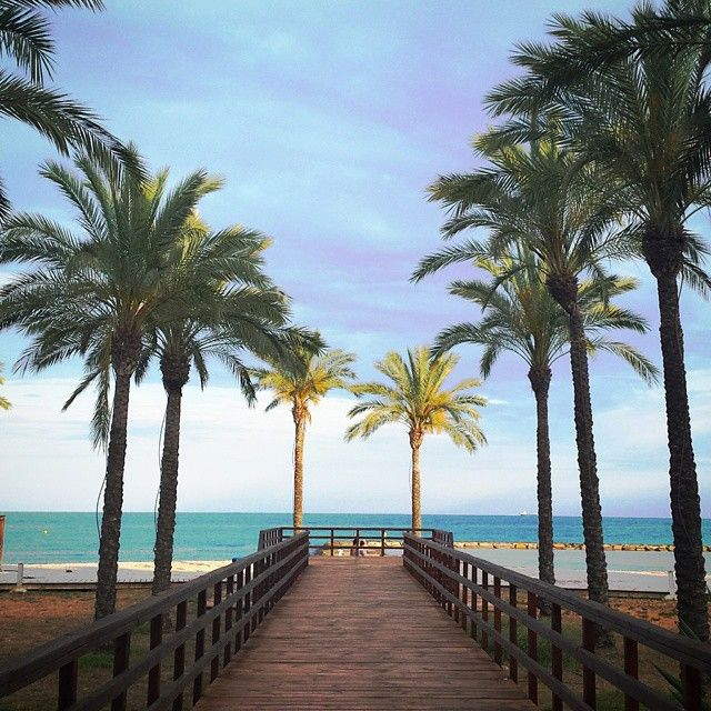 #Atardecer para disfrutar en la #playa Els #Terrers. ¿Un aperitivo en @botavarabenicassim? #palmeras #mar #paseo #paraiso #Benicàssim #Benicassim #Benicassimparaiso #benifornia #Levante #sunset #instabeach #love #mediterraneo