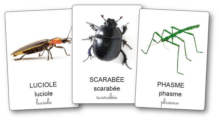 Imagier des petites bêtes du jardin et insectes