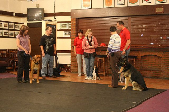 Dog Obedience Training     For more information about Dog Training Classes visit http://www.k9korralsrq.com/