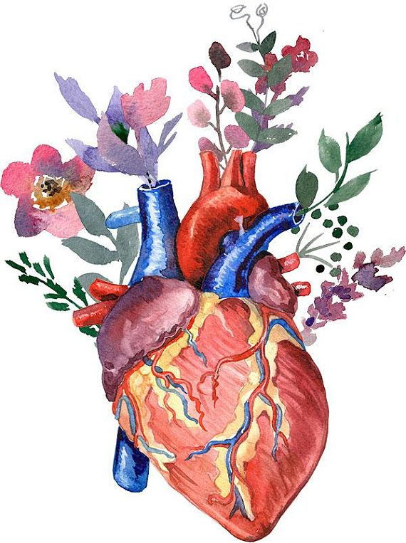 Watercolor Heart And Flowers File To Download Png 300 Dpi Commercial Use Watercolor Heart Anatomy Art Anatomical Heart Art