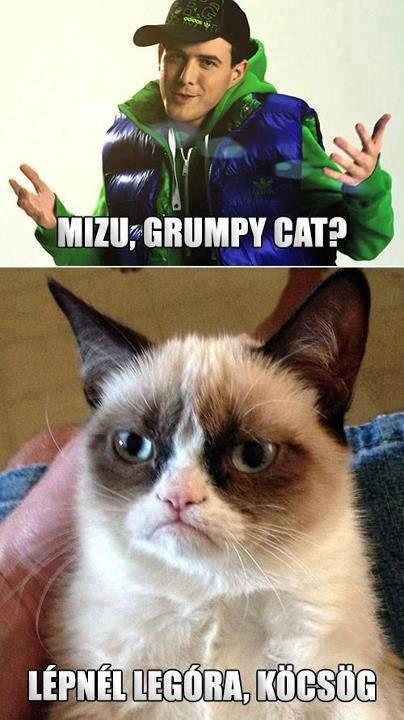 53 best images about Grumpy Cat on Pinterest   Quokka ...