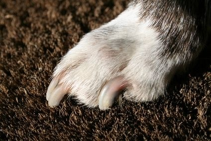 How to Prevent Dog Scratches on a Hardwood Floor | eHow.com