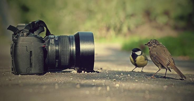 Kuş fotoğrafı çekmenin keyifli yöntemleri, hareketleri yakalamak ve çerçeveyi doldurmak ile silüetleri çekmek ve soyut çekimler yapmak. http://www.fotografcilikkursu.com.tr/kus-fotografi-cekmenin-yontemleri/  #kuşfotoğrafıçekmeninyöntemleri #kuşfotoğrafıçekmeninyolları #kuşfotoğrafıçekmek