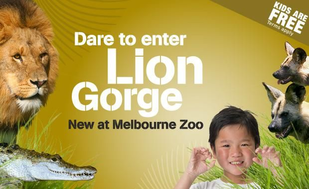 This summer, Melbourne Zoo opens its newest experience: Lion Gorge… Dare to enter Lion Gorge and come face-to-face with our magnificent African Lion bachelor group. Learn about the shifting dynamics of dominance that happen within a group of male lions and see our three lion brothers display sibling rivalry that a lunch-time meal can produce at our new Lion presentations. Plus, you can try your hand at designing beadwork that can help to protect lions in the wild.
