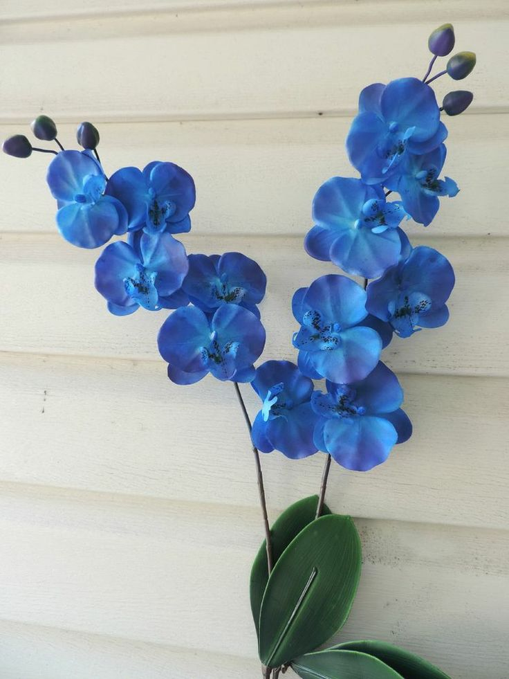 blue orchid flower for sale