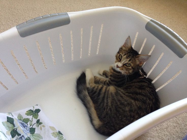 Loves the washing basket.