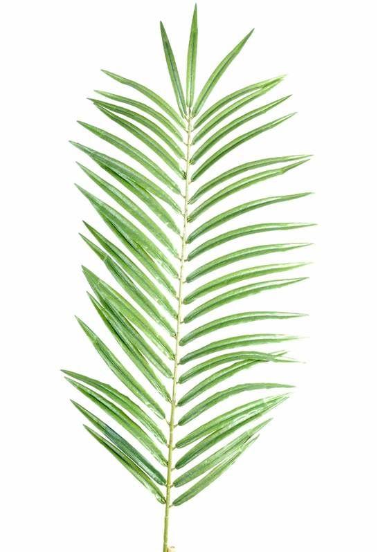 Les 25 meilleures id es concernant palmier phoenix sur for Fausse plante palmier