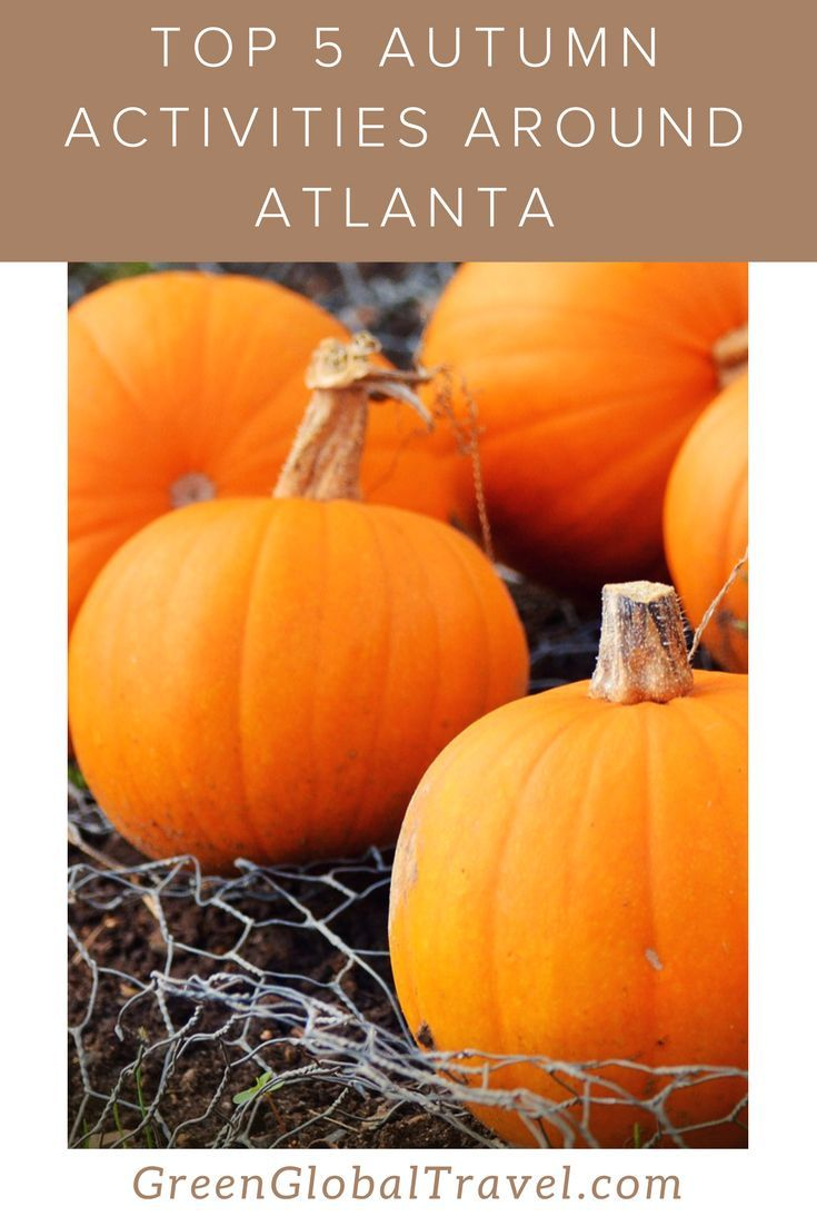 Find out more about 5 Autumn activities in Atlanta before fall ends!