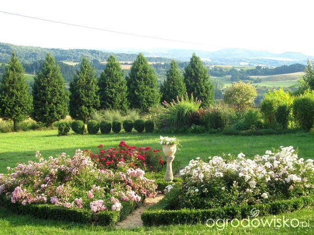 O....! - strona 476 - Forum ogrodnicze - Ogrodowisko