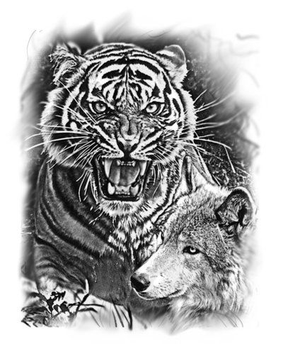Tiger and Wolf by dcbats2000 on DeviantArt