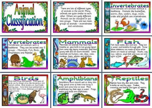 Ks2 Science Teaching Resource Animal Classification Printable Posters For Classroom Display Amphi Science Teaching Resources Ks2 Science Animal Classification