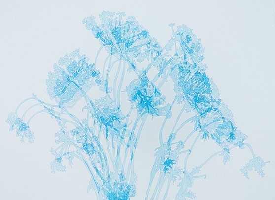 Karin Schaefer, Flowering Dill (for Rebecca), 2009 ink on paper 22 x 30